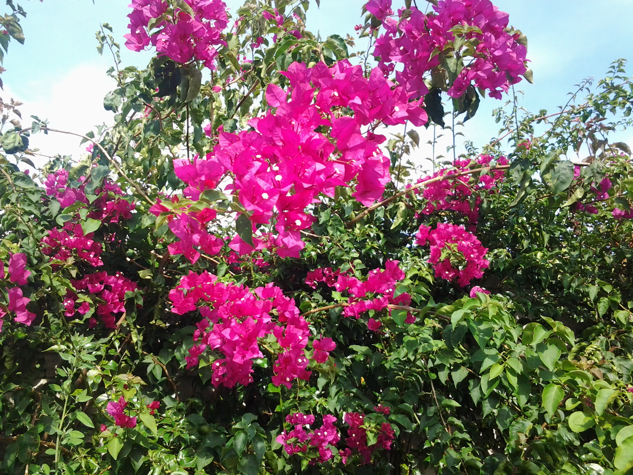FleursEnora2