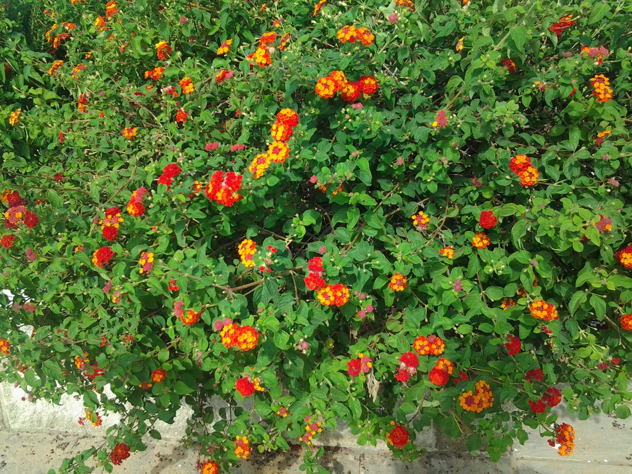 FleursEnora4